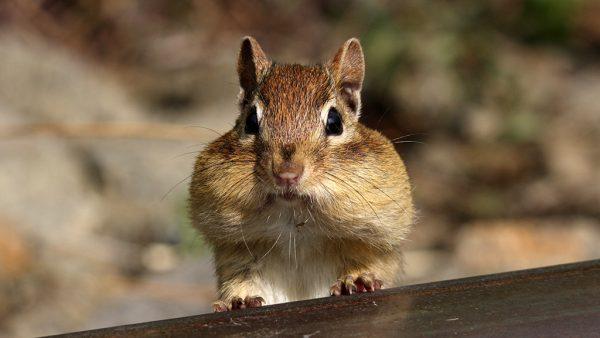 Alles muss raus! Hamsterwochen bei Periplaneta!