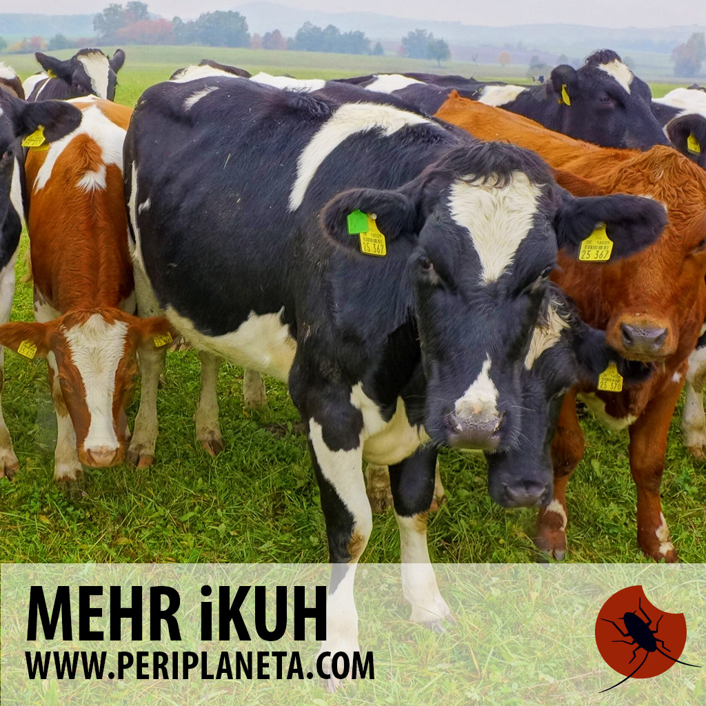 mehr i kuh periplaneta