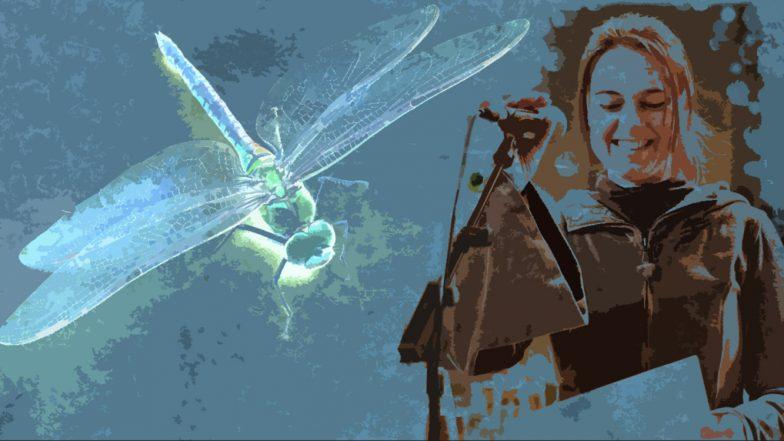Die Nacht der Drachenfliege
