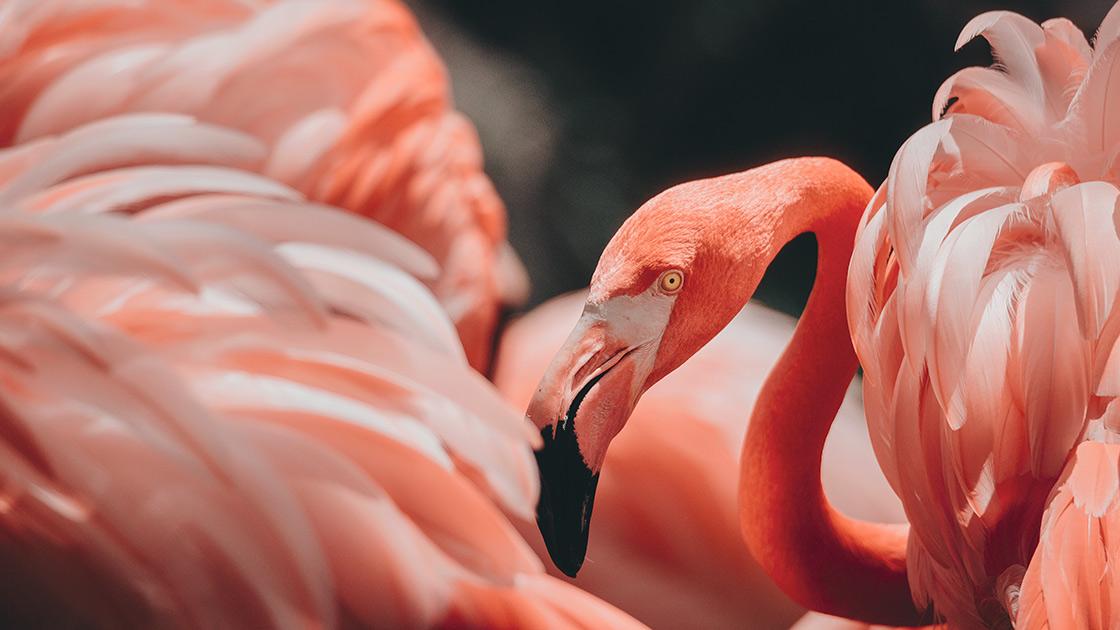 4Leseziten Herbst Flamingo (unsplash)