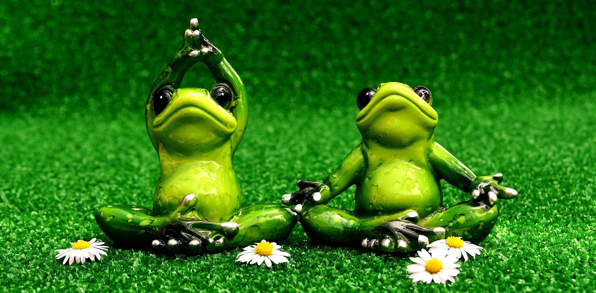 Meditation - periplaneta